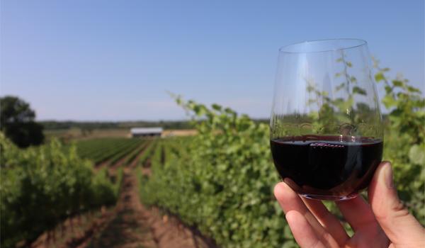 Winery Ontario